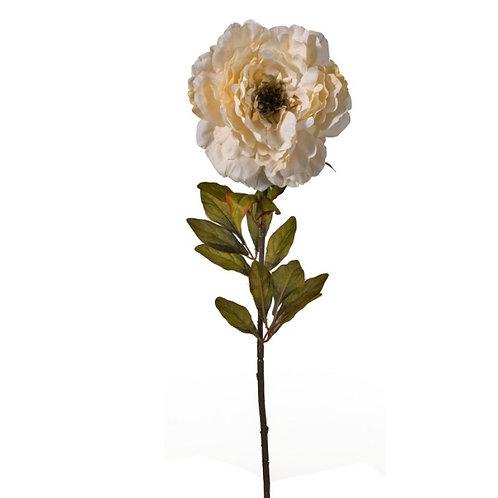 Benjamin rose vintage white  84cm