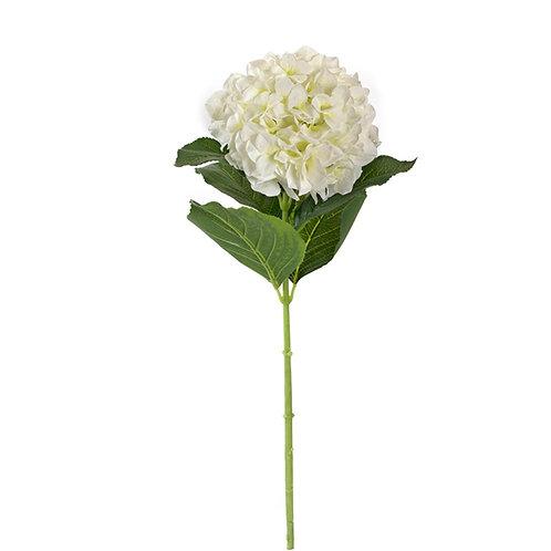 Hydrangea white 19x80cm