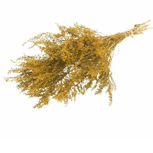 Solidago plant yellow dried