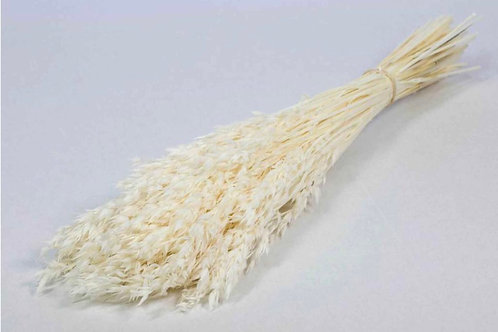 Haver avena bleached white dried