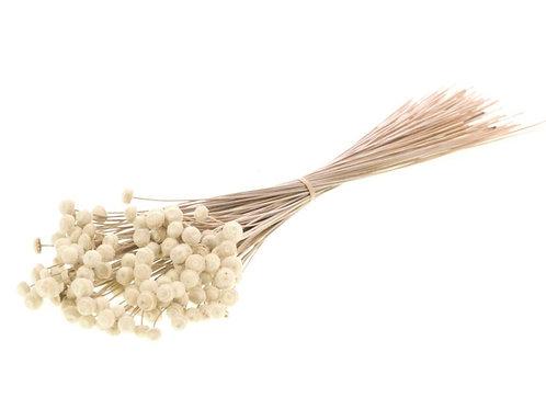 Botao natural dried