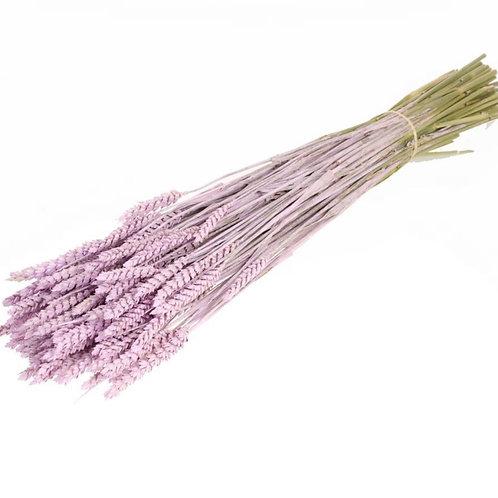 Tarwe lilac misty dried