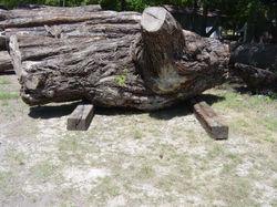 Mesquite, logs2069.jpg