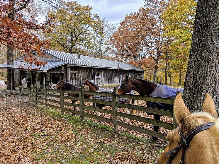 Horse Boarding Catawba Equestrian Center United States