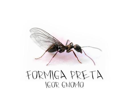 Igor Gnomo - Formiga Preta (álbum)