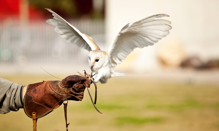 Rutland Falconry