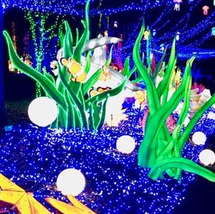 Le Festival Thoiry lumières sauvages édition 2020