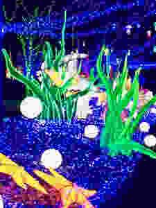 Festival Thoiry lumières sauvages