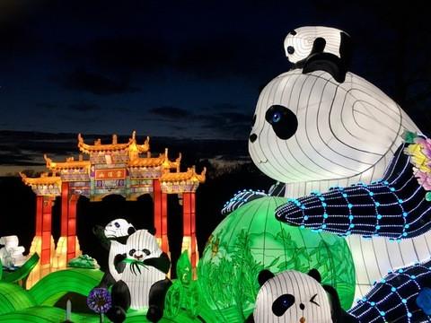 Festival Thoiry lumières sauvages Pandas