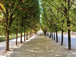 Singing Trees : quand les arbres du Palais Royal chantent