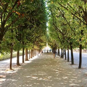 Singing Trees : quand les arbres du Palais Royal chantent