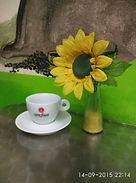 offerta caffe pisa