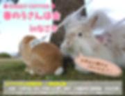 春のうさんぽ会-B.jpg