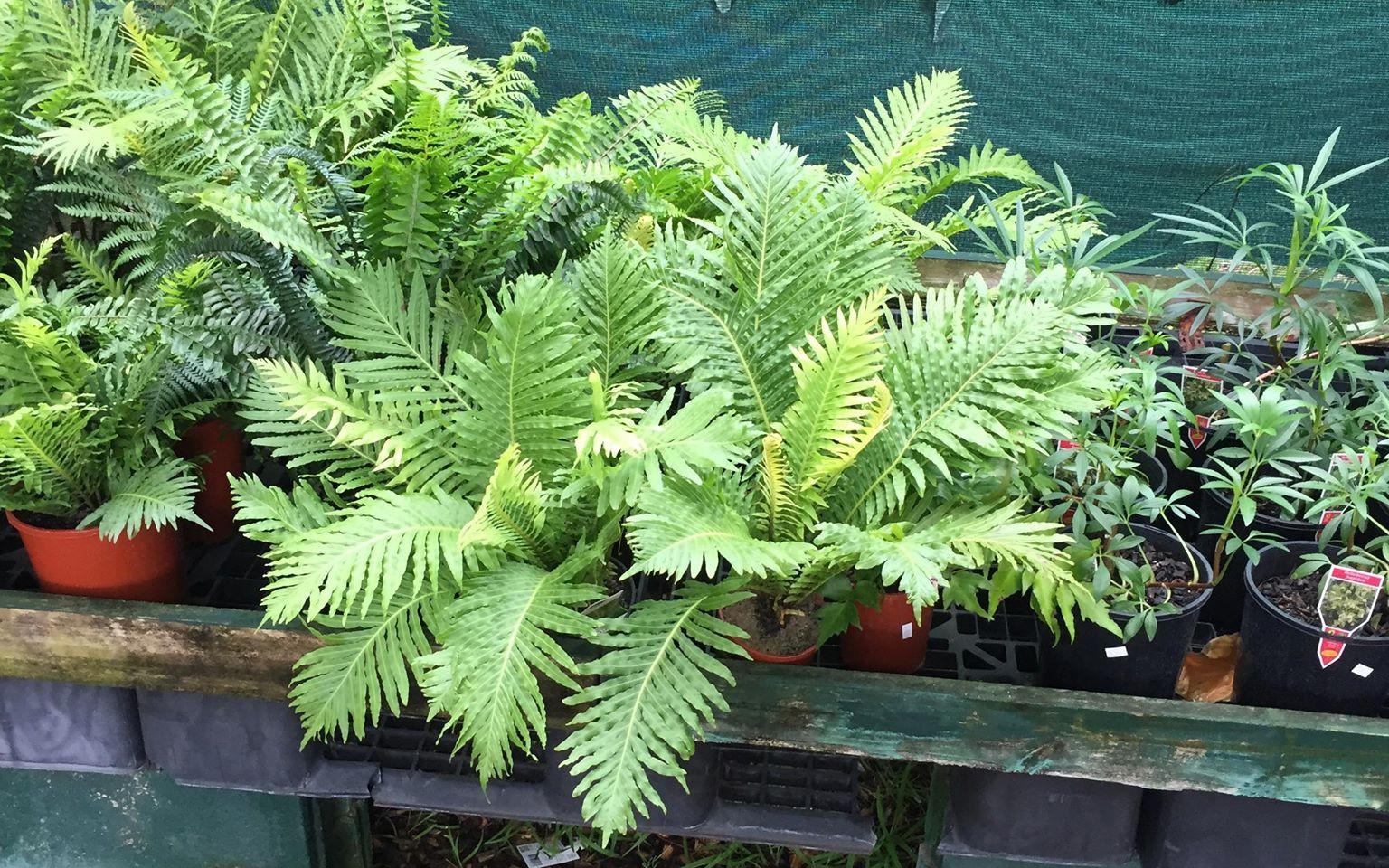 plants11.jpg