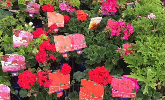 plants7.jpg