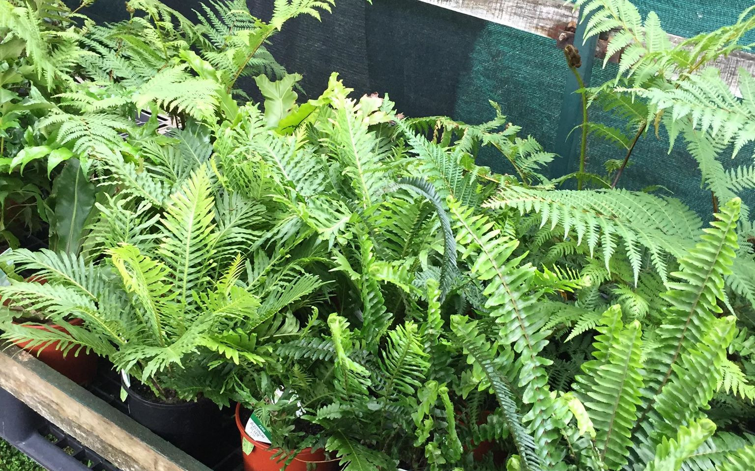 plants9.jpg