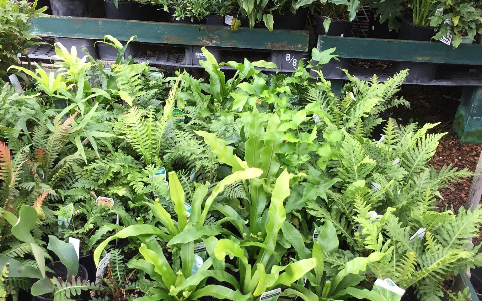 plants12.jpg