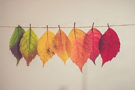 カラフルな葉