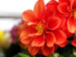 red flowers.jpg