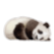 6_Panda.png
