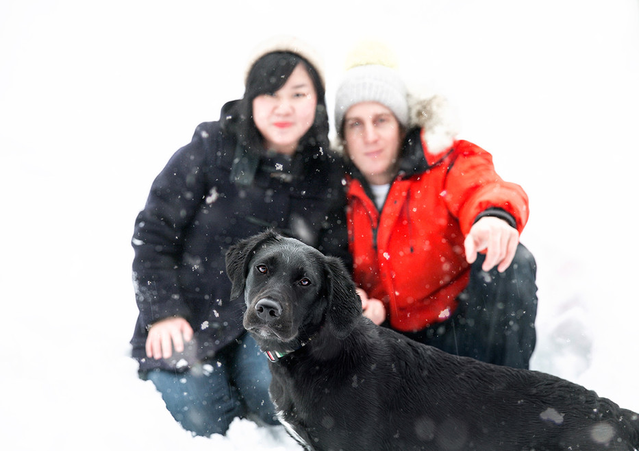 Snow portrait with a black Labrador