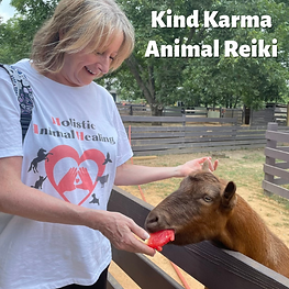 Woman Giving Reiki to a Goat.