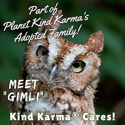 Kind Karma Cares Animal Adoption, Gimli, an Owl.