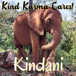 Kind Karma Cares Animal Initiative - Kindani, Elephant.