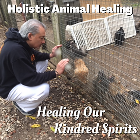 Holistic Animal Healing - 23.png