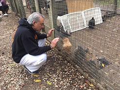 Kind Karma Reiki Session for Animals