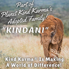 Kind Karma Worldwide Adopting Elephants