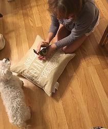 Kind Karma Reiki Sessions for Animals.
