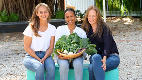 Box Greens is now Imagine Farms