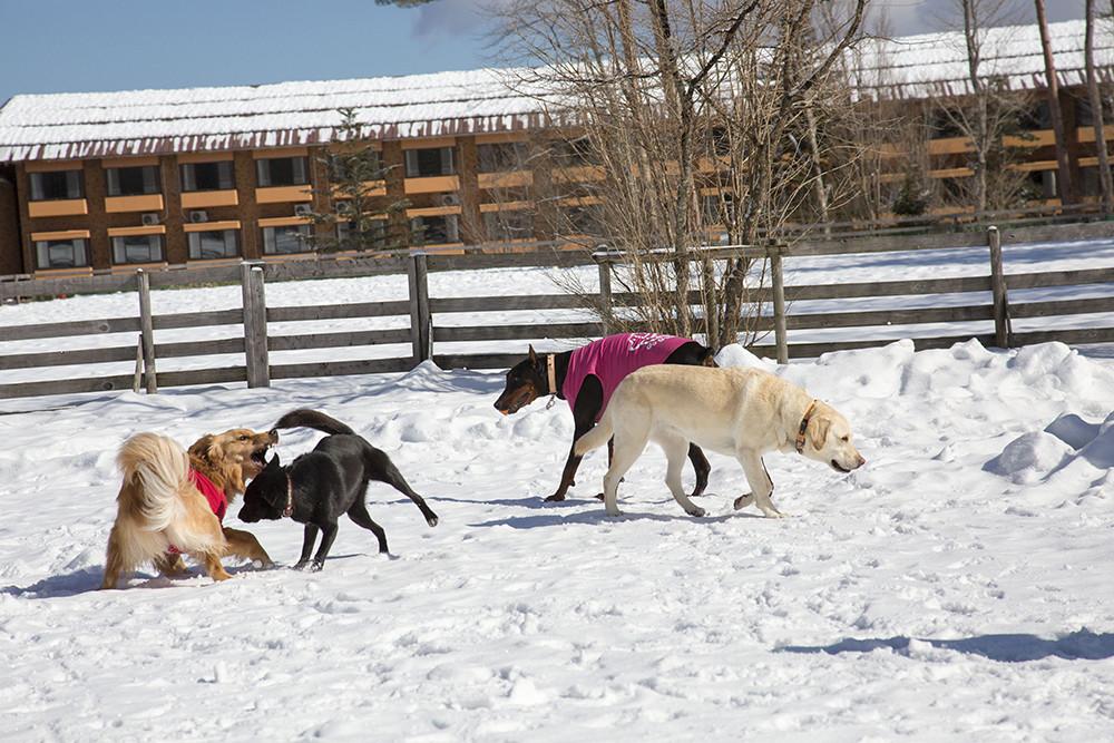 ドッグラン(雪)