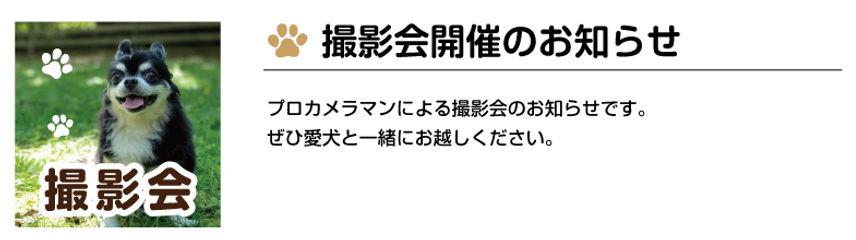 撮影会のお知らせ.jpg