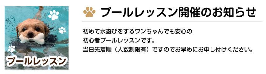 プールレッスンのお知らせ.jpg