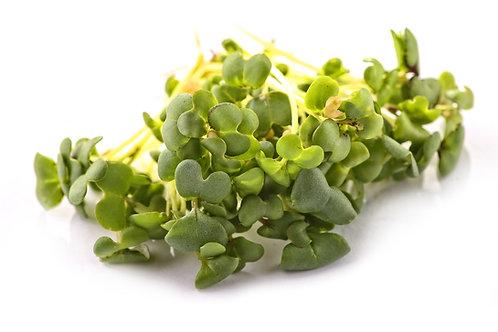 Broccoli Microgreens