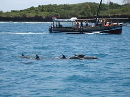 Dhow and dolphins at wasini Island