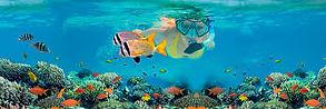 Snorkeller on a reef