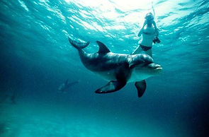 Snorkeller and dolphin at Wasini Island