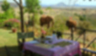 Elephants at Lion Hill Lodge lunch