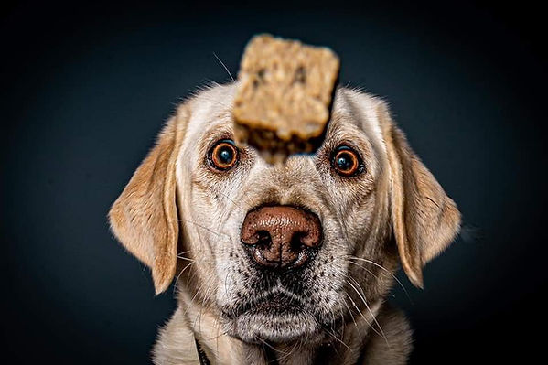 Hunderleckerchen
