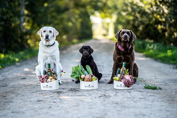 Artgerechtes Hundefutter