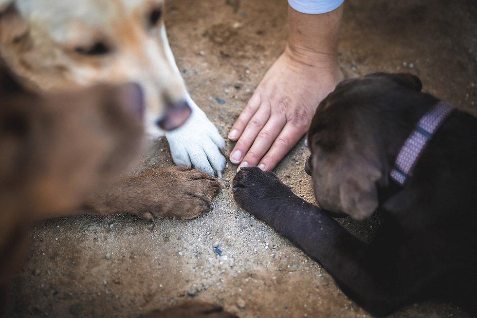 Hund-Mensch-Team