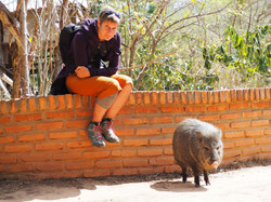 """SEES and a peccary at the """"Refugio"""""""