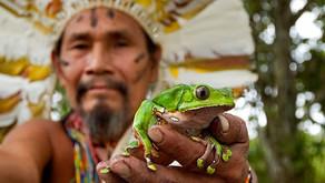 Le kambo : une pratique de nettoyage ancestrale et holistique issue d'Amazonie