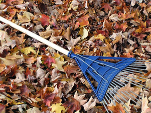 Blue Rake On Fallen Leaves.jpg