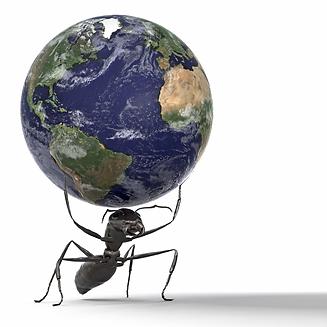 Ants-Globe.png