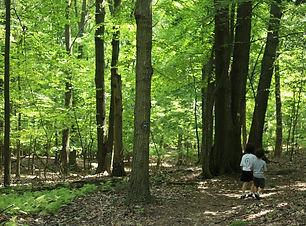 kids-nature-walk.jpg