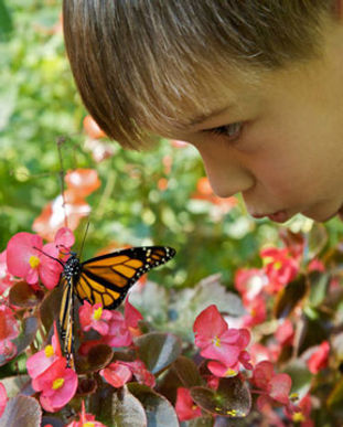 kid_with_butterfly.jpg